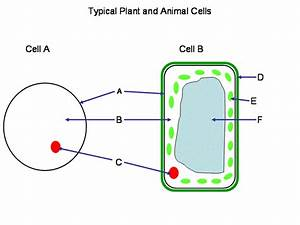 Cells Quiz   Biological Science Picture Directory