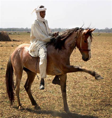 horse africa african nomads horses stallion power nomad chad geographic saddle rangers barb berber zakouma saving wildlife horseback chadian ranger