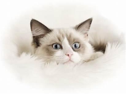Cat Funny Wallpapers Desktop