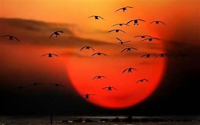 Feelings Wallpapers Feeling Eagle Fire Flamingos Reed