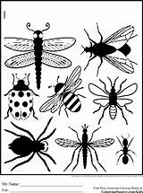 Coloring Pages Bug Print Insect Bugs Printable Preschool Insects Sheets Printables Cartoon Drawing Fly Outline Butterfly Getdrawings Getcolorings Ginormasource Silhouette sketch template