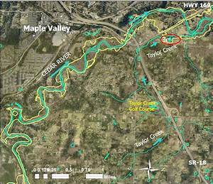 Taylor Creek Mitigation Project  Cedar River