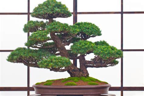 formation cuisine comment faire d 39 un arbre un bonsaï