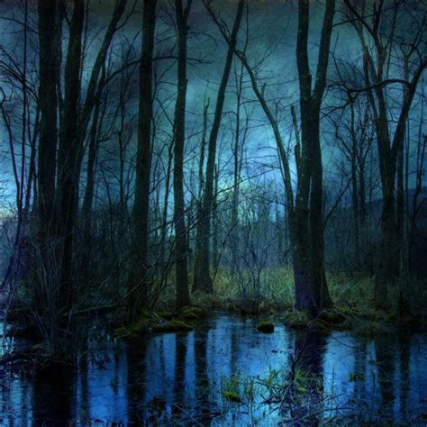 Surreal Landscape Photograph Woodland Twilight