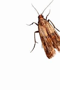 Ameisen Mit Flügel In Der Wohnung : ber ameisen in der wohnung freut sich niemand um einen kleineren befall an ameisen loszuwerden ~ Orissabook.com Haus und Dekorationen