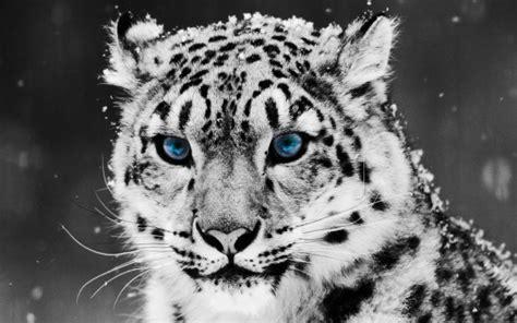 hermosas imagenes de animales salvajes  domesticos