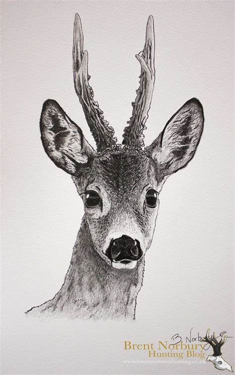 deer sketch drawing skill