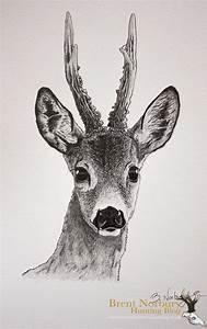 roe deer drawing - Google Search | :: DIY Furniture ...