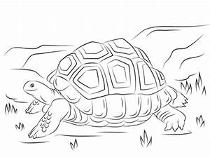 Cute Aldabra Giant Tortoise Coloring Page Free Printable