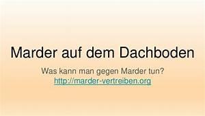 Marder Dachboden Was Tun : marder auf dem dachboden ~ Michelbontemps.com Haus und Dekorationen