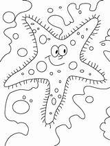 Starfish Coloring Pages Printable Outline Sheets Sea Sheet Colored Clipart Letscolorit Coloring2print sketch template