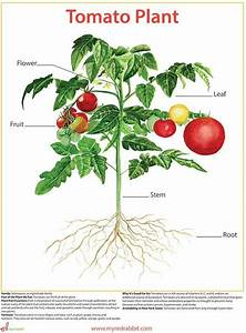 70 Best Tomatoes Images On Pinterest