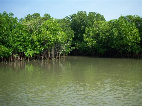 Marine Biome- Mangroves - ThingLink