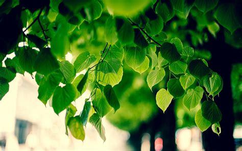 Autumn Wallpaper Hd 1920x1080 Green Leaves Tree 6960305