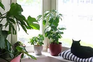 Plantes Exotiques D Intérieur : mes plantes arbustes exotiques mango and salt ~ Melissatoandfro.com Idées de Décoration
