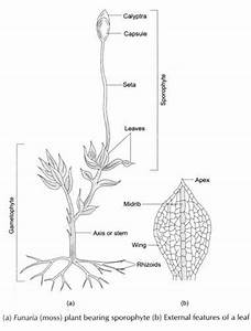Experiment To Observe Diversity Of Plants