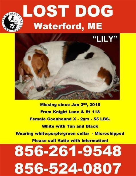 lost   beagles bassets hounds images