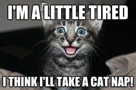 Tired Cat Meme - i m a little tired i think i ll take a cat nap misc quickmeme