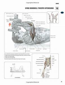 Lying Dumbell Triceps Extensions