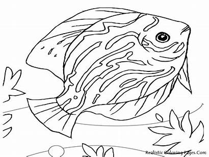 Coloring Pages Realistic Animal Printable Animals Ocean