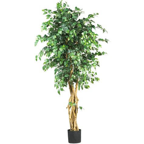 ficus tree 6 foot palace style ficus tree potted 5216 nearly natural