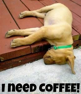 Need Coffee!   Funny   Pinterest