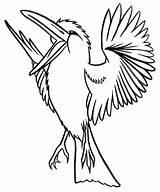 Coloring Kookaburra Pages Colouring Outline Clipart Bird Coloriage Birds Para Animal Oiseau Colorier Oiseaux Clip Colour Dibujos Animals Template Drawing sketch template