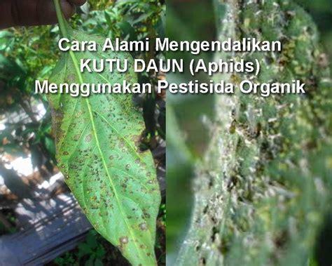 membuat pestisida organik nabati