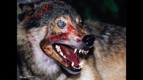 zombies animales reales mundo sufrimiento del