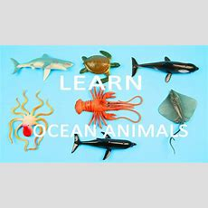 Learn Sea Animals + Water Animals Names And Sounds  Learning Ocean Animals For Kids Kids