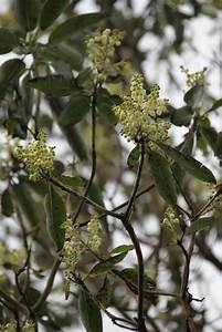Petit Arbre Persistant : arbousier planter et tailler ooreka ~ Melissatoandfro.com Idées de Décoration