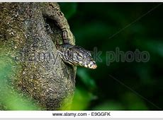 Rainforest Stock Photos & Rainforest Stock Images Alamy