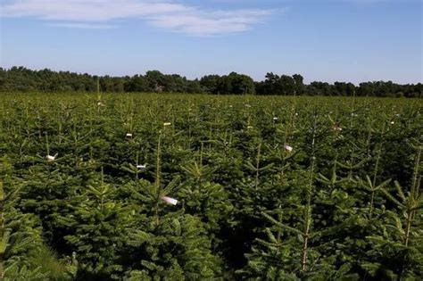 one of scotland s largest christmas tree farms up for sale