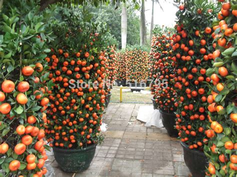 are ornamental plums edible 1000 images about gardening on pinterest
