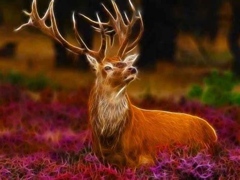 3d Wallpaper Animals by Beautiful Frog Wallpaper For Free Beautiful Deer