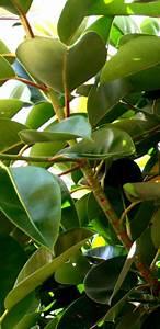Große Baumwunden Versorgen : zimmerpflanzen richtig pflegen haushaltstipps und ~ Lizthompson.info Haus und Dekorationen