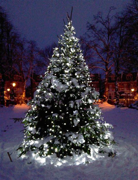 outside christmas tree lights christmas tree light ideas christmas light ideas
