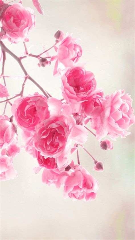 Animated Roses Wallpaper - 283 best images about beautiful flowers wallpapers