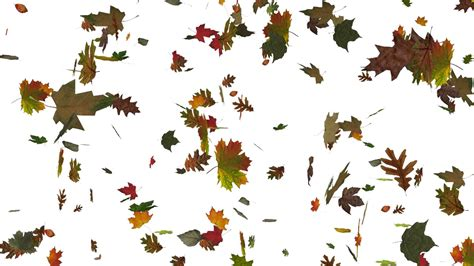 Autumn Tree Leaf Fall Animated Wallpaper - fall leaves backgrounds 183