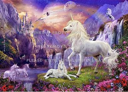 Unicorn Land Fantasy Nature Horse Animals Magic