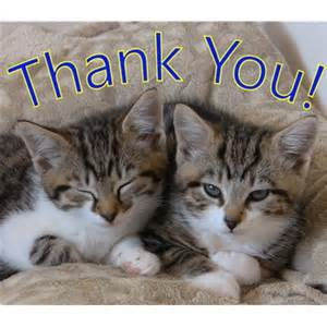 Cat Thank You Everyone