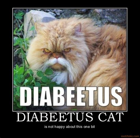 Diabeetus Cat Meme - wilford brimley diabetes meme memes