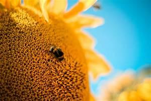 Welche Blumen Für Bienen : die sache mit den bienen und blumen furios online ~ Eleganceandgraceweddings.com Haus und Dekorationen