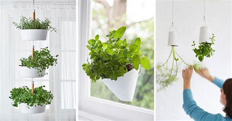 indoor garden idea hang  plants   ceiling walls
