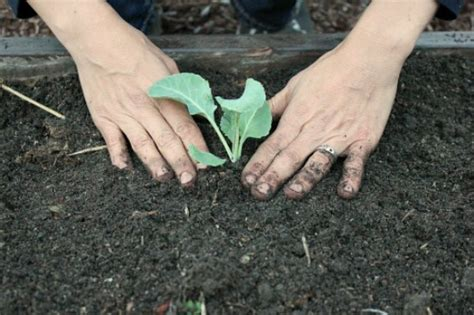 How To Build And Plant A Square Foot Garden  One Hundred