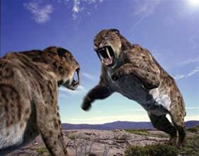 saber tooth cat smilodon sabre toothed tiger