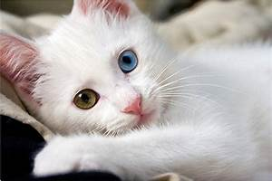 Very Cute Cat - Wallpaper - Cute Cats Picture