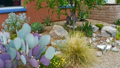 Creative Ideas For Kitchen - desert gardening in sync with the seasons