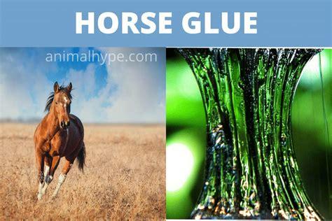 glue horse horses killed animal