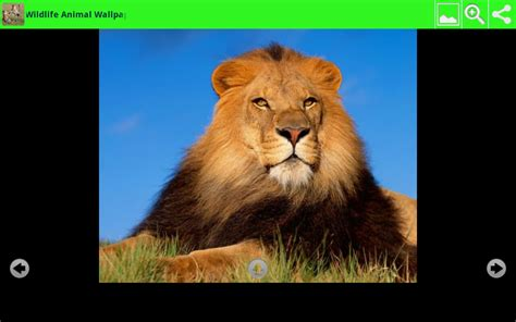 Animal Wallpaper App - wildlife animal wallpapers appstore for android